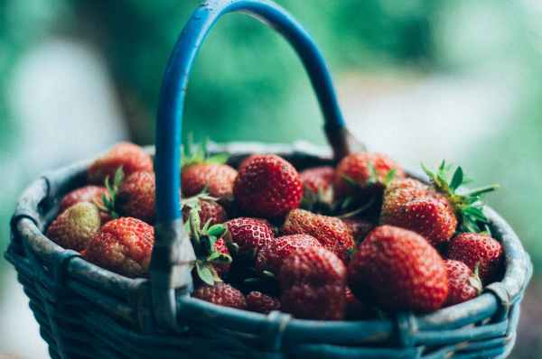 close up photography of strawberries